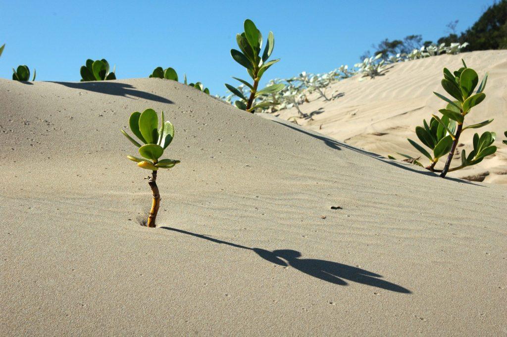 desert-1024x681.jpg